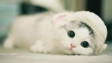 Cute Silly Cats | Funny Animals Videos ? 这些猫咪太搞笑了吧
